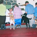 service dogs at communion at St Albans Episcopal church