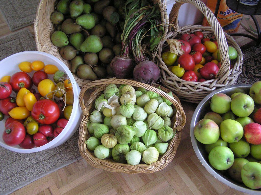 Garden bounty - a harvest feast