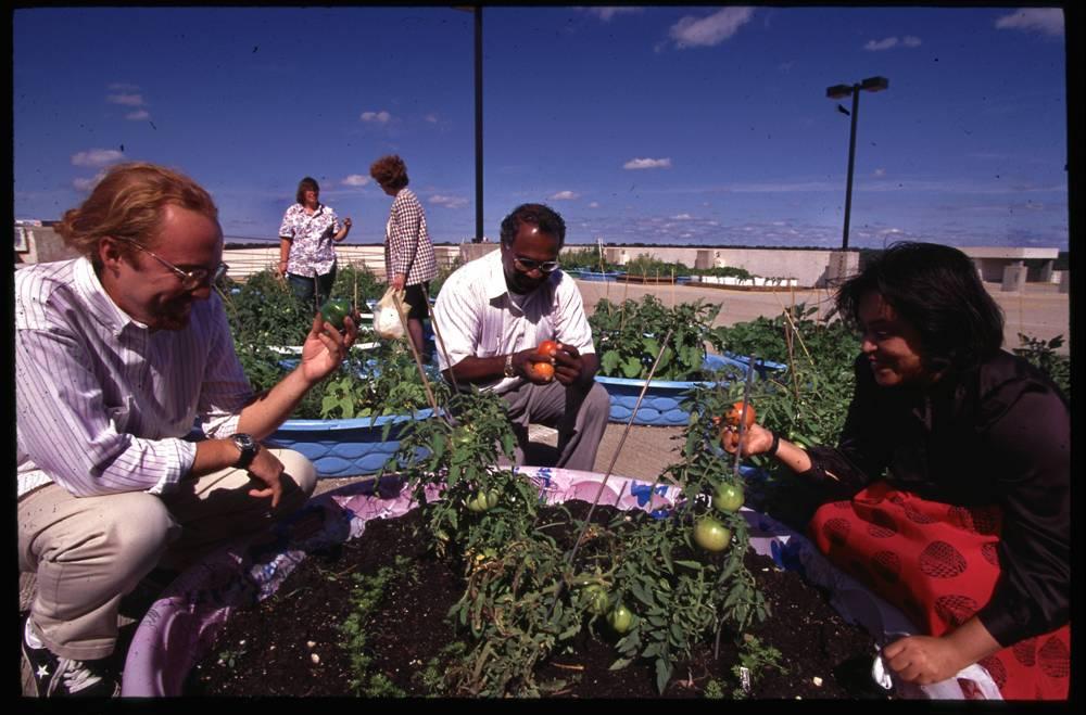 Job Ebenezer - container gardening