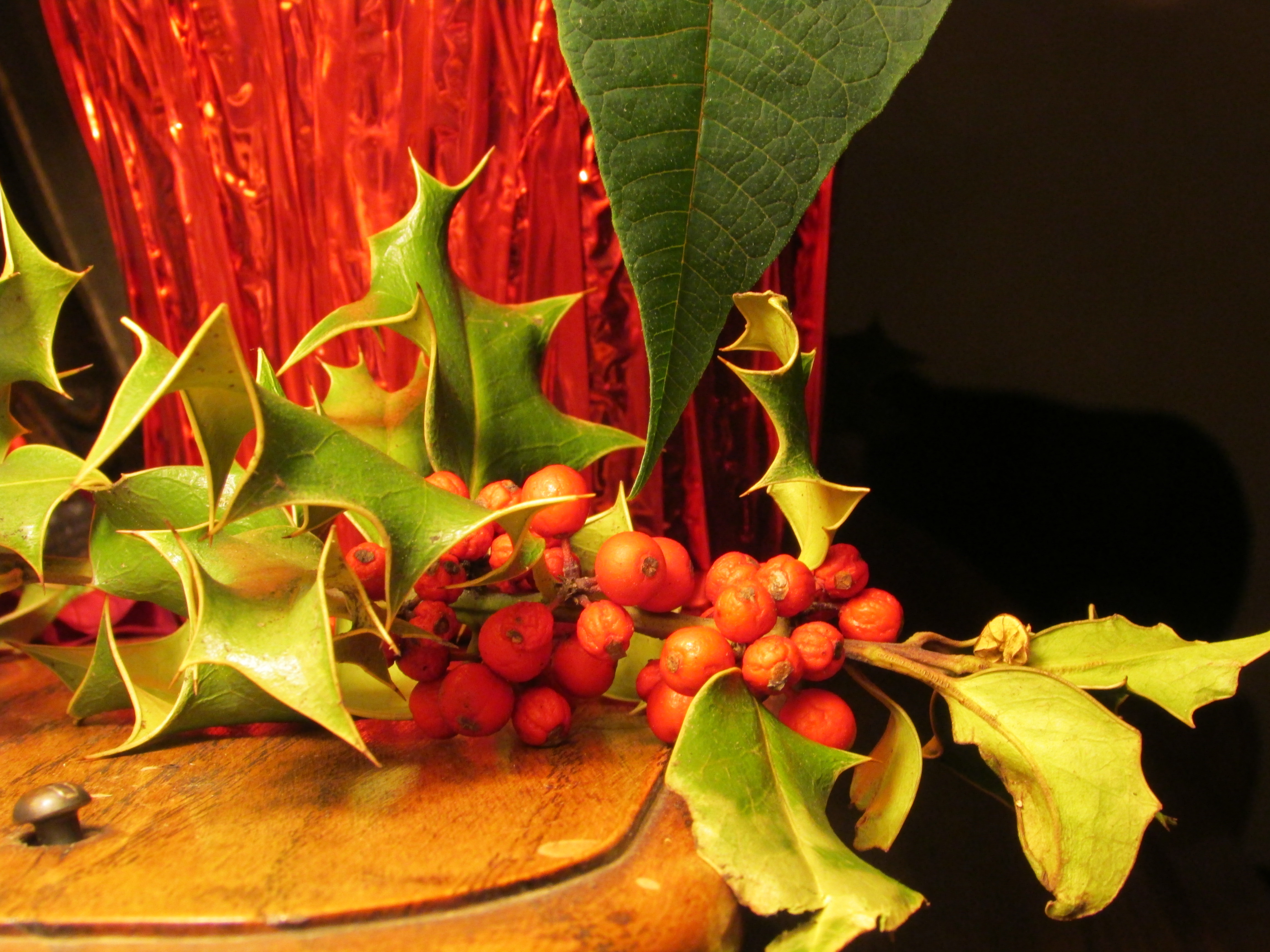 Christmas greetings (c) Christine Sine