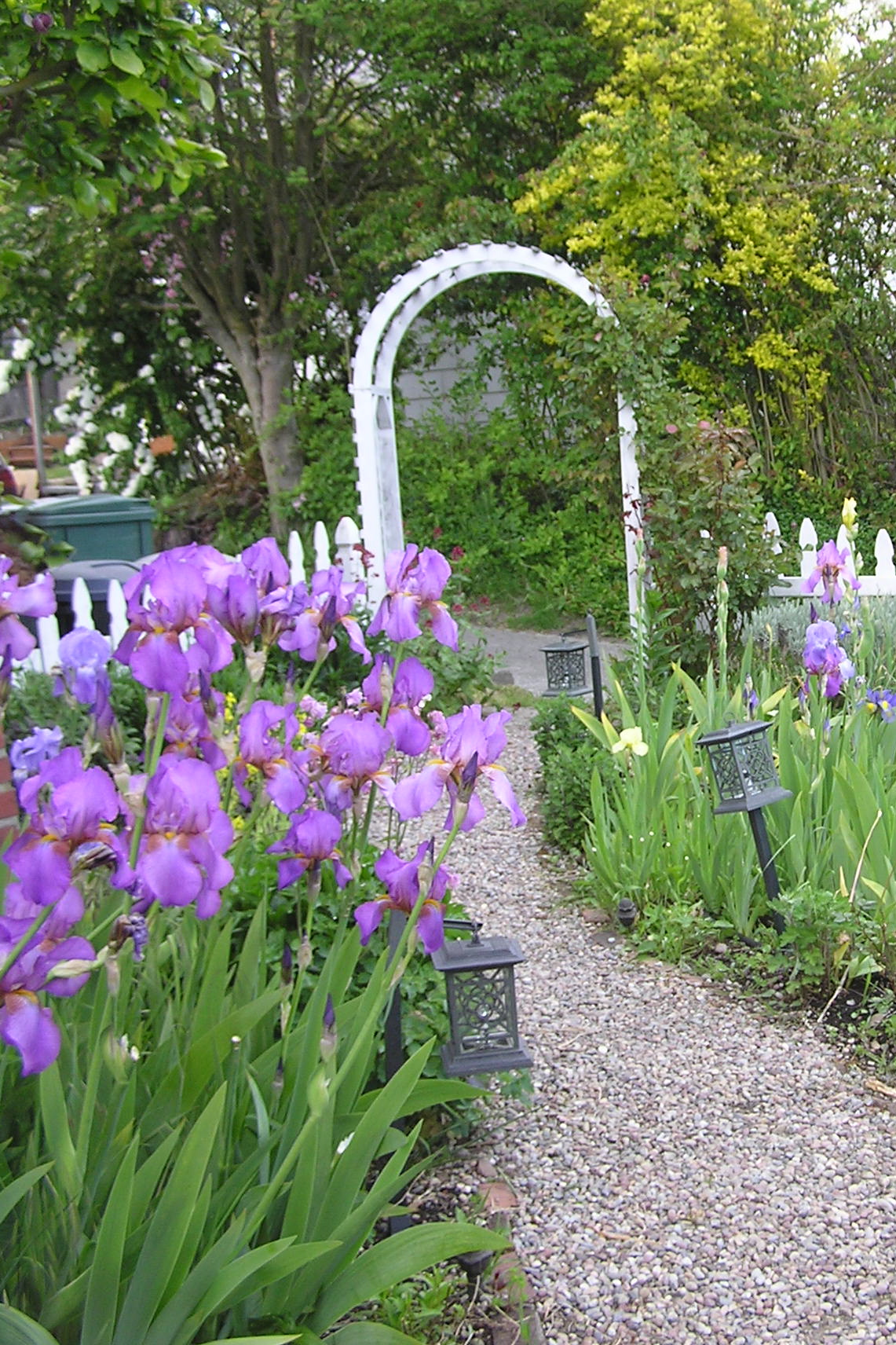 Irises and archway