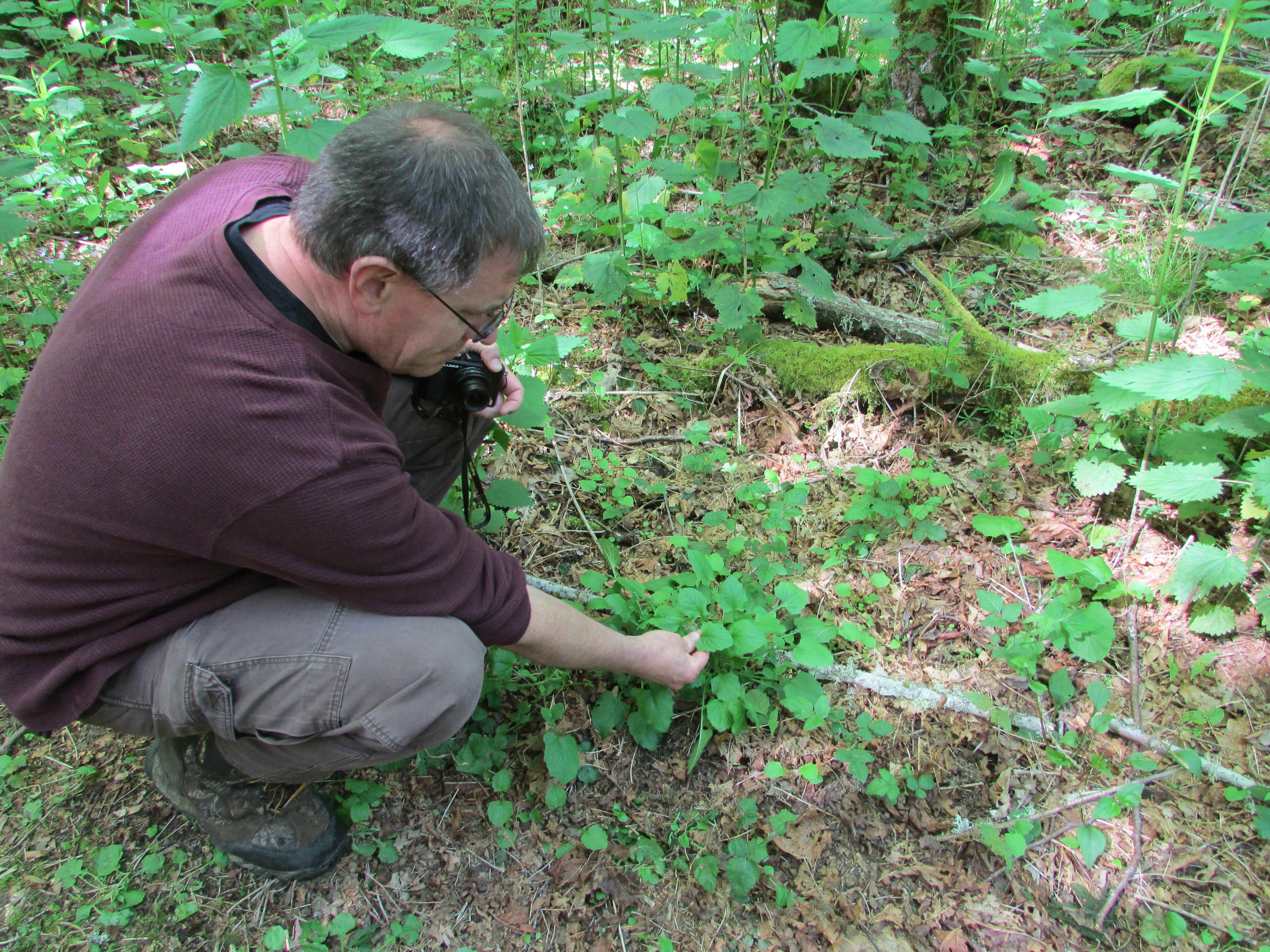 Andy Wade samples a local salad green