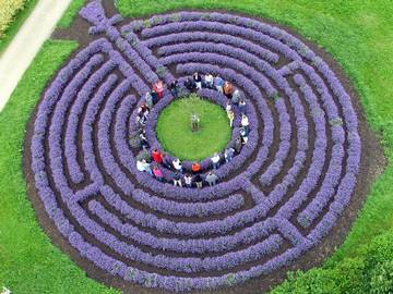 Lavender labyrinth Kastellaun Germany