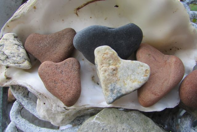heart shaped rocks from a summer beach walk