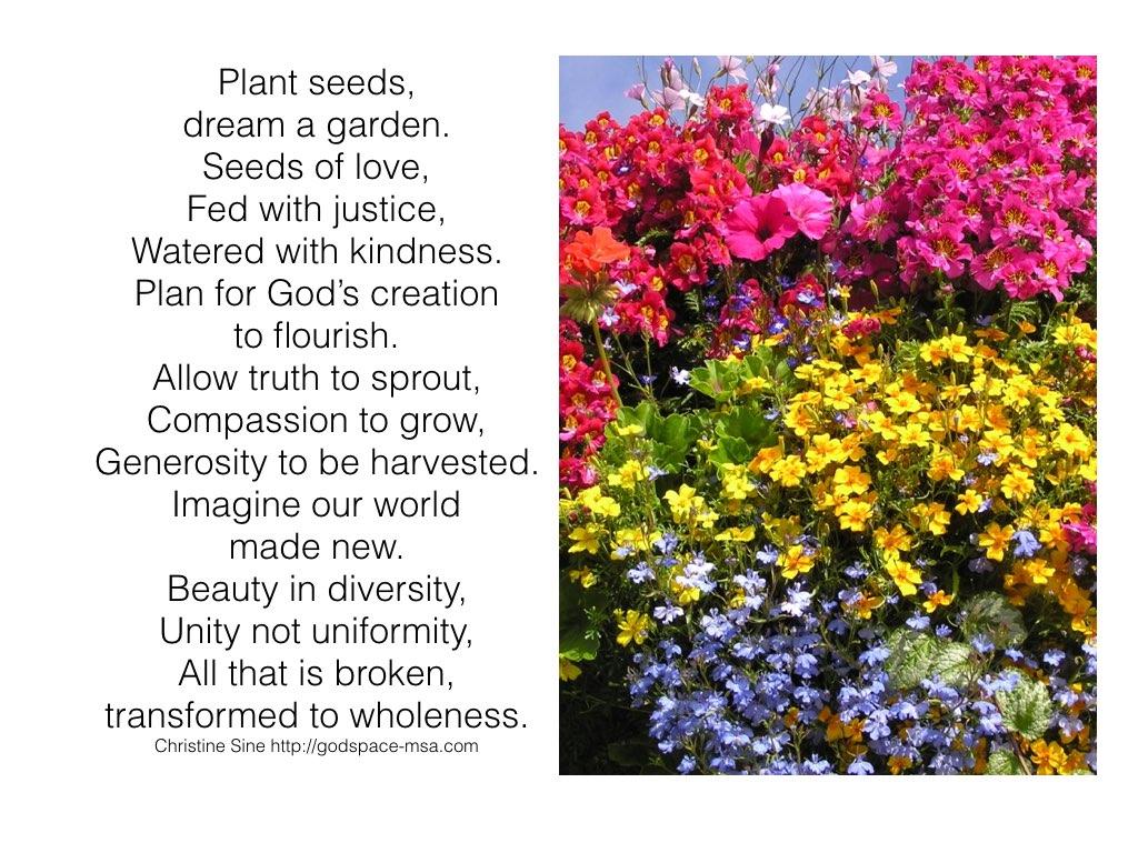 Plant seeds.001