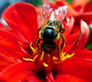 garden.bee.3