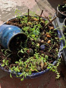 Uncluttered garden