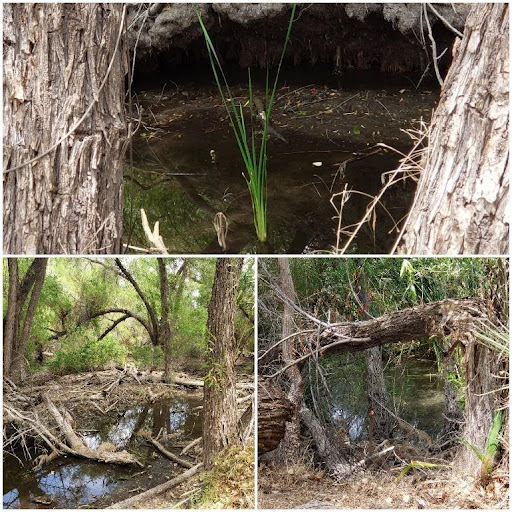 Murky Pond 2