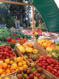 harvest vegatables
